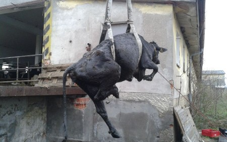 """RYCHNOVSKO – Nedělní ráno 23. listopadu pro mě začalo zazvoněním mobilního telefonu. Ošetřovatelky dojnic mi sdělily, že nedopatřením došlo kútěku krávy ze stáje. Z odklízecí rampy kráva spadla nakryt močůvkové<a class=""""moretag"""" href=""""http://www.orlickytydenik.cz/krava-spadla-do-mocuvkove-jimky-hasici-ji-zachranili/"""">...celý článek</a>"""