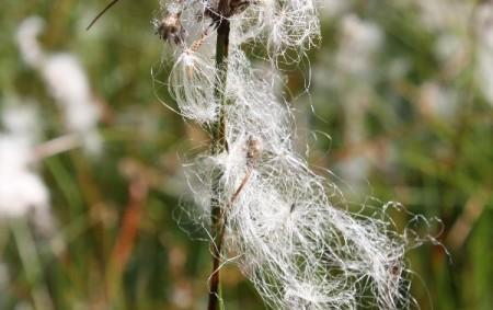 """Orlický týdeník pokračuje v pravidelném seriálu, který potěší především milovníky krásné přírody Orlických hor. Každý týden pro vás připravujeme fotografii rostliny nebo zvířete, kterou okomentuje některý z odborníků ze správy<a class=""""moretag"""" href=""""http://www.orlickytydenik.cz/fauna-a-flora-orlicka-suchopyr-uzkolisty/"""">...celý článek</a>"""