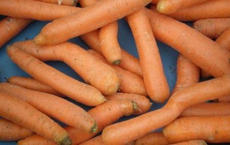 """Mezinárodní den mrkve připadá každoročně na 4. dubna, je celosvětovým vyvrcholením oslav všech milovníků této zeleniny. Při této příležitosti jsou pořádány mrkvové párty, oslavy a happeningy. Mrkev má totiž řadu<a class=""""moretag"""" href=""""http://www.orlickytydenik.cz/podorlicka-kucharka-mrkev/"""">...celý článek</a>"""