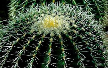 NOVÉ MĚSTO N. M. – Tradiční výstava kaktusů, sukulentů amasožravých rostlin proběhne na novoměstském zámku ve dnech 14. – 16. července. Výstavu na nádvoří a varkádách zámku pořádají novoměstští kaktusáři.
