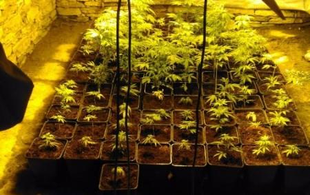 """RYCHNOVSKO – Na základě informací, že vjednom objektu na Rychnovsku dochází kneoprávněnému pěstování rostlin konopí, začali rychnovští kriminalisté tuto možnost prověřovat. Podezření se záhy potvrdilo. Policisté během několikaměsíční intenzivní práce<a class=""""moretag"""" href=""""http://www.orlickytydenik.cz/rychnovsti-polici-pri-akci-chibalo-odhalili-pestirny/"""">...celý článek</a>"""