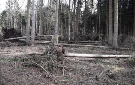 """REGION – Podle prvních hrubých odhadů poslední říjnovou neděli silný vítr poškodil, vyvrátil, nalomil nebo zlomil až milion metrů krychlových dříví ve státních lesích, tedy milion stromů. Většinou jde o<a class=""""moretag"""" href=""""http://www.orlickytydenik.cz/silny-vitr-poskodil-asi-milion-stromu-ve-statnich-lesich/"""">...celý článek</a>"""