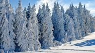RYCHNOVSKO – Hasiče během víkendu opět zaměstnaly padající stromy. Proruby – Odklizení nebezpečně nakloněných stromů nad vozovkou 15. ledna provedli v5. 36 hodin hasiči HZS Rychnov nad Kněžnou, JSDH Lhoty