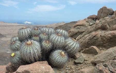 """HLINNÉ – NATURA Hlinné připravila další zajímavou přednášku, tentokrát o cestě za kaktusy do Chile v podání mladého kaktusáře Honzy Doležala z Týniště nad Orlicí. Přednáška bude doplněna mnoha zajímanými<a class=""""moretag"""" href=""""http://www.orlickytydenik.cz/za-chilskymi-kaktusy-do-hlinneho/"""">...celý článek</a>"""