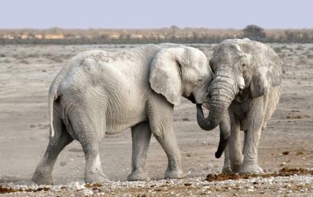 """DOBRUŠKA – Vdobrušském kině se chystá výstava Afrika – ráj a peklo zvířat. Výstavu fotografií východní Afriky objektivem Martina Ladnara zahájí vernisáž, která se uskutečníve středu 1. července v18 hodin.<a class=""""moretag"""" href=""""http://www.orlickytydenik.cz/afrika-raj-a-peklo-zvirat/"""">...celý článek</a>"""