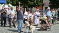 DOBRUŠKA – Celkem devět vodících psů, kteří se sjeli se svými páníčky do Dobrušky z celé republiky, předvedlo v pátek 15. června užaslým divákům, že se umějí postarat o svého