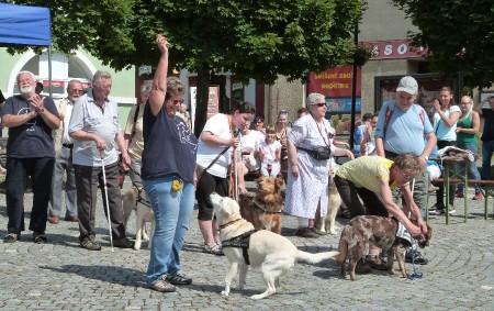 """DOBRUŠKA – Celkem devět vodících psů, kteří se sjeli se svými páníčky do Dobrušky z celé republiky, předvedlo v pátek 15. června užaslým divákům, že se umějí postarat o svého<a class=""""moretag"""" href=""""http://www.orlickytydenik.cz/vodicim-psum-se-nedaril-pouze-aport-spekacku/"""">...celý článek</a>"""