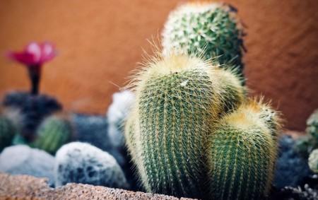 """RYCHNOV N. K. – V sobotu 15. září až v úterý 18. září je od 9 do 17 hodin k vidění výstava kaktusů a sukulentů v domě zahrádkářů v Rychnově<a class=""""moretag"""" href=""""http://www.orlickytydenik.cz/vystava-kaktusu-a-sukulentu-2/"""">...celý článek</a>"""