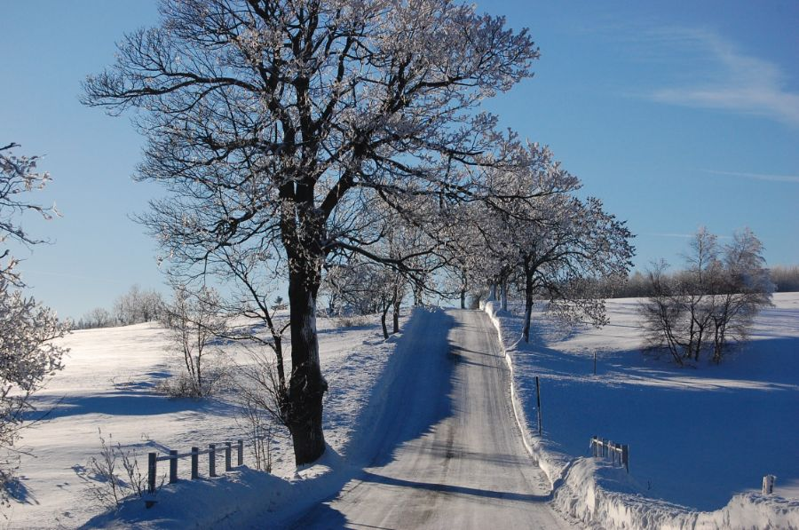 strom_zima_silnice