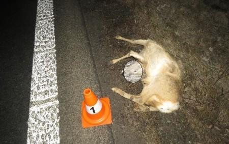 """RYCHNOVSKO - V úterý 12. února šetřili rychnovští policisté ve svém teritoriu dvě nehody za účasti zvěře. K první nehodě došlo v18.45 hodin na silnici II. třídy č. 319 u obce<a class=""""moretag"""" href=""""http://www.orlickytydenik.cz/dve-nehody-za-ucasti-zvere-stretu-se-nedalo-zrejme-zabranit/"""">...celý článek</a>"""