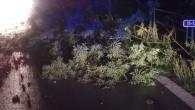 RYCHNOVSKO – Hasiči na Rychnovsku opět odstraňovali 21. srpna ze silnice stromy. V00.20 hodin to bylo vRybné nad Zdobnicí a večer ve 22.21 hodin v Čermné nad Orlicí – včásti