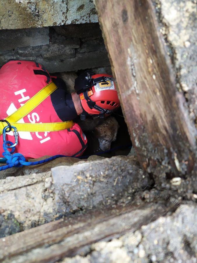Labrador zůstal uvízlý v kanalizační trubceViewImage