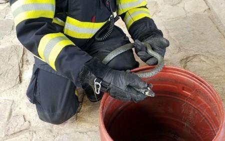 """ORLICKOÚSTECKO - Užovka obojková potrápila hasiče a majitele rodinného domu vŽamberku vpondělí odpoledne. Obyvatelé domu se obávali, že se jedná o jedovatého hada. Plaz se schovával pod kameny na skalce.<a class=""""moretag"""" href=""""http://www.orlickytydenik.cz/uzovka-obojkova-potrapila-hasice-a-majitele-rodinneho-domu/"""">...celý článek</a>"""